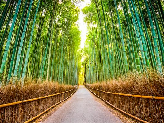 嵯峨野竹林旅游景点风景